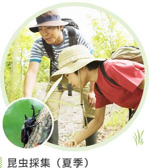 昆虫採集(夏季)